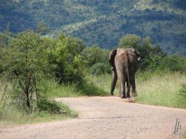 Heading for the hills by AfricanObserver