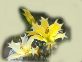 flower of light by maurice1997