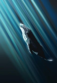 Whale by NickRileyArt
