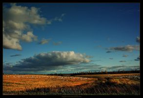 Goose Field by Sagittor