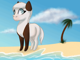 Hooves in the sand. by camiif3tt