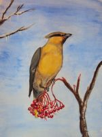 Waxwing by Amanouzume