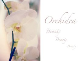 Orchid by lciam