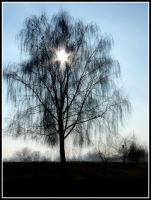 Light in tree by Shira9