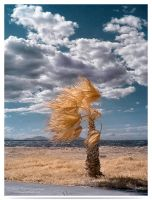 Beautiful Wind -infrared by LightSculpting