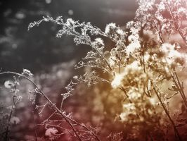 Spring is comming III by lotos15
