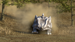 Rhyhorn Safari by Prophet-Blaq