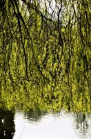 Weeping 2 by johnwaymont