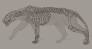 SI - Lion Skeleton by SunMoonDragoness
