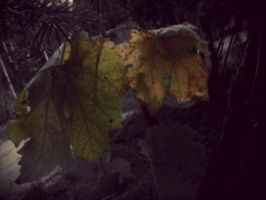 Leaves by TrixieF0x