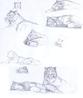 Tiger sketches by Crisjofreart
