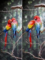 Zoo 5 Macaws by PirateLotus-Stock