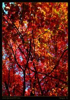 Autumn in Sofia by TANGRA