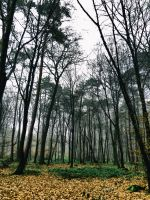 Alone in the forest III. by Activvv