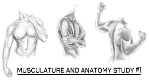 Musculature Anatomy Study 1 by Spi-ritual-ity