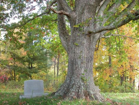 Large Tree Stock 2 by HauntingVisionsStock