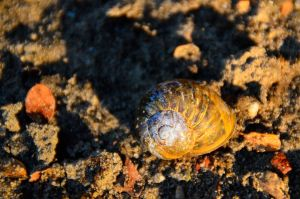 Sand Snail by MarieLoup