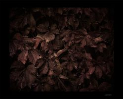 Fall Wall by Jack-Nobre