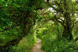 Winding Path To Madron Well by runique