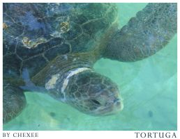 Tortuga by Chexee