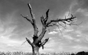 lonely tree widescreen by jess0r