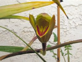 Unexpected Orchids 2 by MikeHungerford