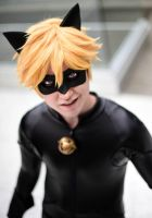 Chat Noir- You Called? by twinfools