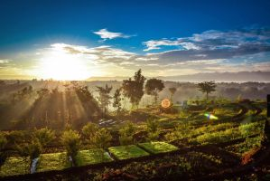 Good Morning and have a nice day by setohidayat