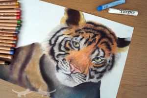 Tiger - Pastel Test by Alextiy