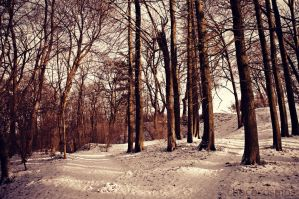 A Walk into the Forest by Chococosmos