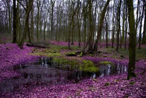 StockHeaven ~ Nature forest 13c by MiriStock
