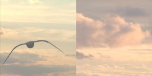 Diptych 2 by tractern