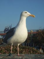 SeaGull by ThEiUfO