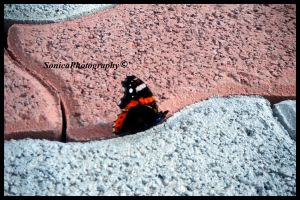 Butterfly by Starless10