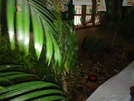 Plants at room by Chinulinie
