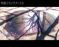 5 Centimeters Per Second WP 02 by hop3sfall