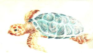 Sea Turtle by Adharan
