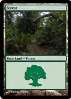 Magic Forest Cumberland Island Photo Card IV by lizking10152011