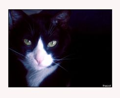 TheCat II by soninha-place