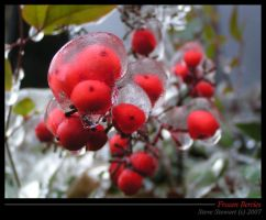 More iced berries by StewartSteve
