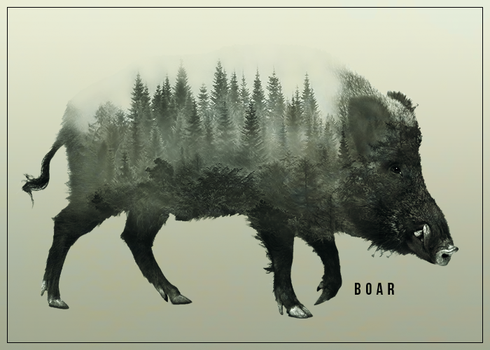 Boar by AnyLord