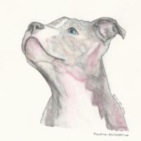 American Staffordshire Terrier by PizzaFisch