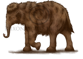 Baby Mammoth by Riixon