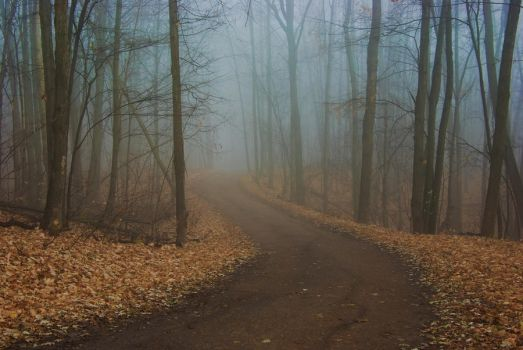 Foggy road by a-never