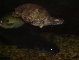 Turtle + Fish by Ironhold