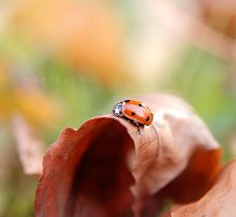On the autumn leaf II by marteczna