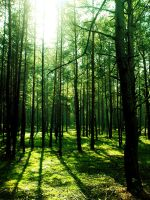 Green Forest by GuddiPoland