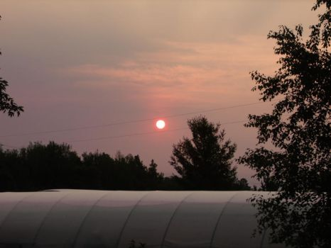 Red Sunrise Over Greenhouse by EllaRow