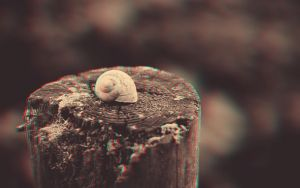 Lone Snail 3-D conversion by MVRamsey