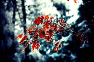 Leaf of autumn by wojteq2